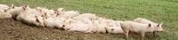 Rusia no muestra indicios de cambiar en su posición por el veto a la importación de carne desde la UE