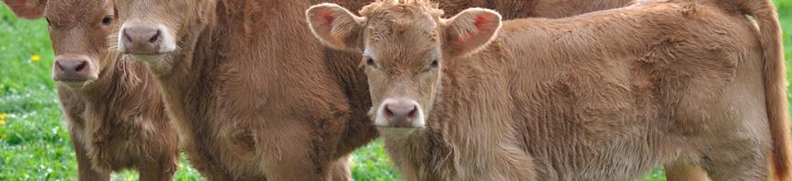 Aplicación completa del Reglamento (CE) nº 1099/2009 relativo a la protección de los animales en el momento de la matanza
