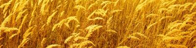 Nuevas biotecnologías: ¿un nuevo marco jurídico, distinto al de los OMG?